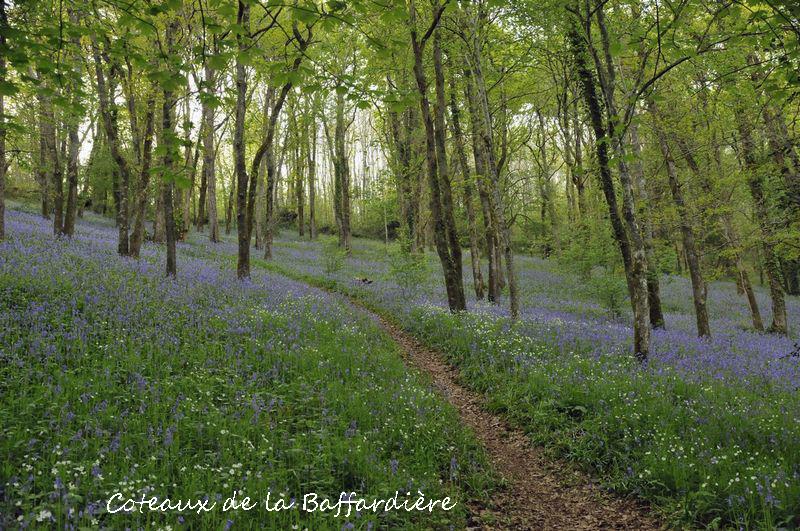 Coteaux de la Baffardière - Champ Saint Père